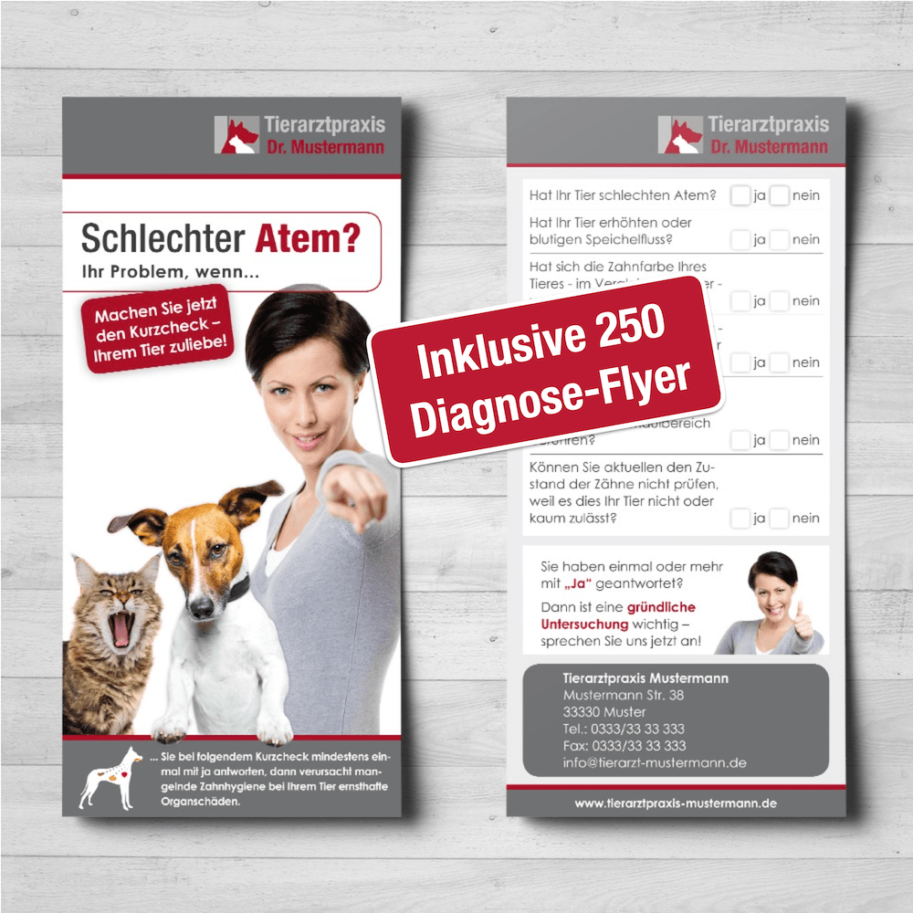 Dental Veterinärmedizin Flyer Ruhmservice