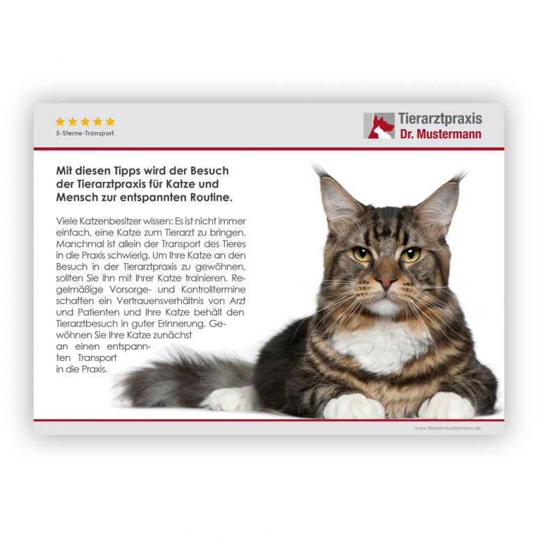 Tipps Transport Katze - 2-3