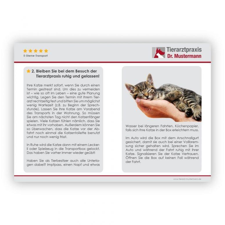 Tipps Transport Katze - 6-7