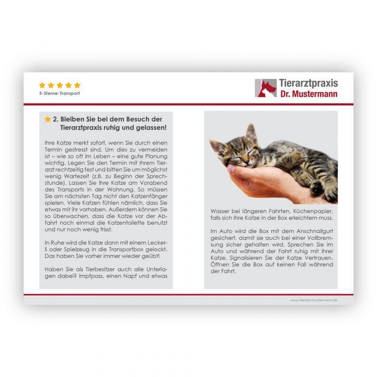 Tipps Katze transportieren Tierarzt