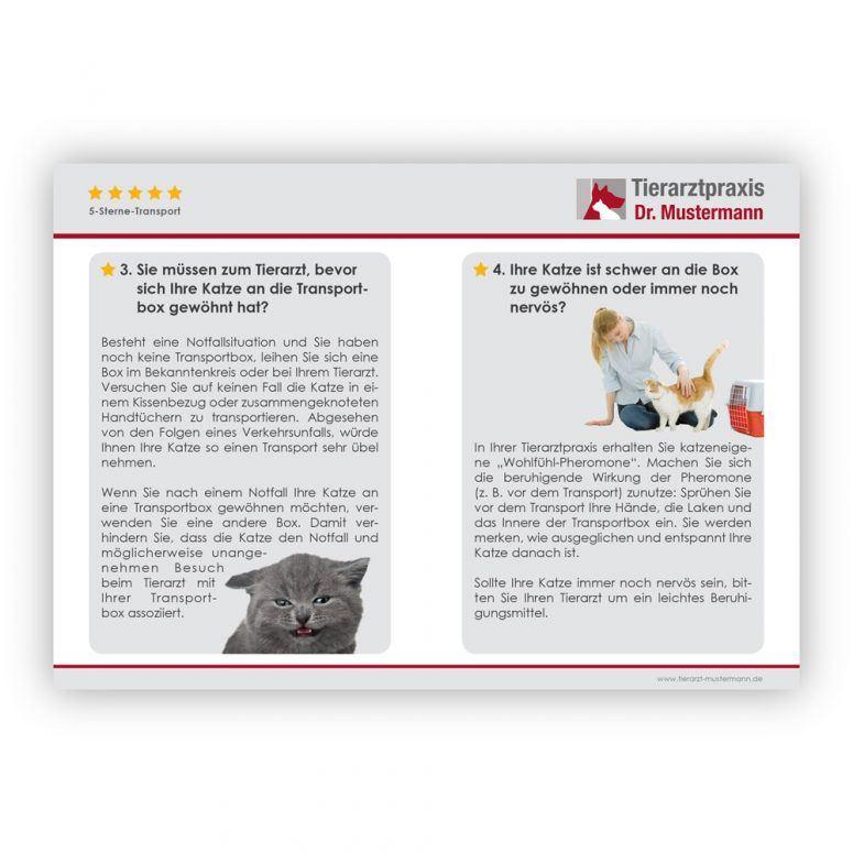 Katzen Transport Tipps - 8-9