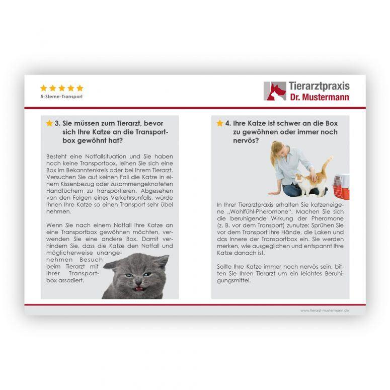 Tipps zum Transport von Katzen