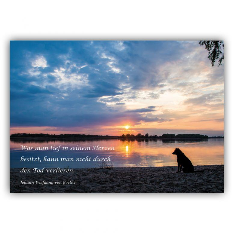 Kondolenzkarte für hunde
