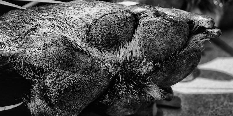 euthanasie in der Tierarztpraxis