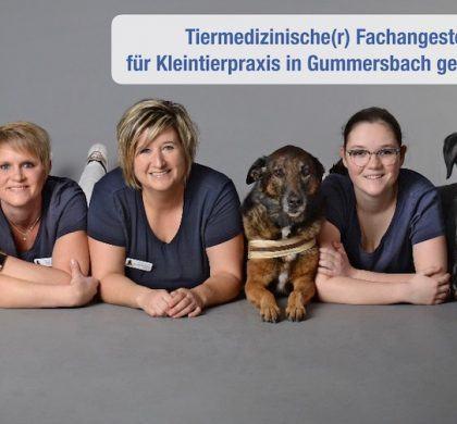 Stellenangebot: Tiermedizinische Fachangestellte (m/w/d) für Tierarztpraxis in Gummersbach gesucht!
