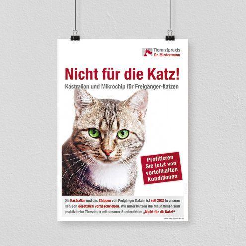 Kastrationspflicht Katzen Sonderaktion