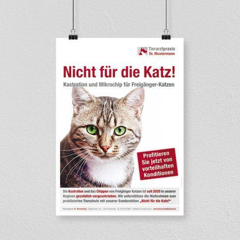 Aktion Katzenschutz Tierarzt